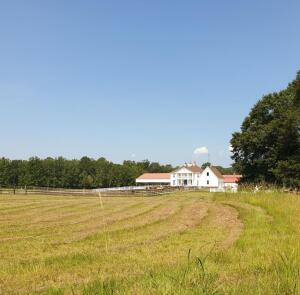 Horse Farm - House & 13+/- Acres