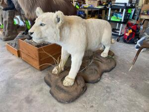 Full - Mount White Lion