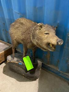 Full - Mount Boar